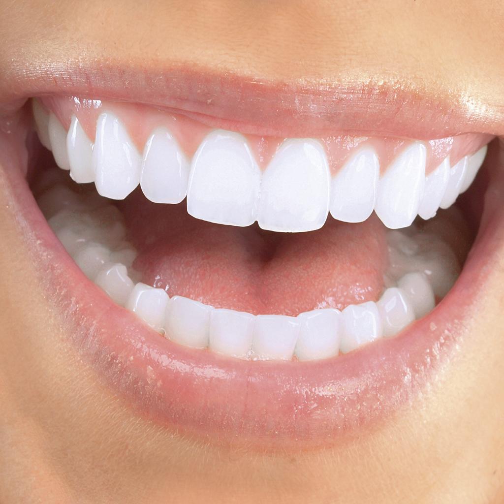 Salud Bucal DENTAID - Anatomía y desarrollo de la cavidad bucal: La ...